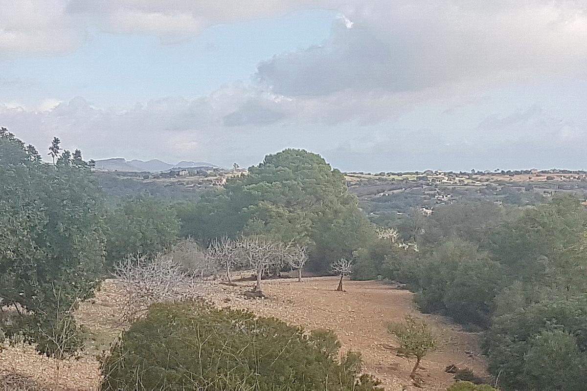 finca santanyi immobilien kaufen Mallorca