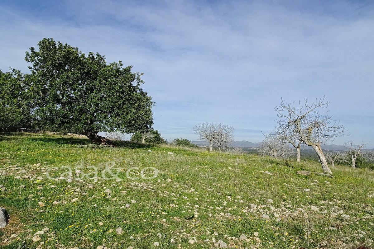 finca Manacor immobilien kaufen Mallorca